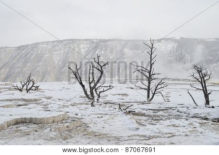 Yellowstone In Winter