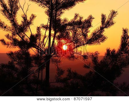 Sunset Shining Through The Evergreen
