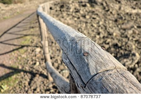 rusty nail in wooden fence