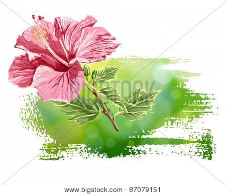 Hibiscus flower on green background
