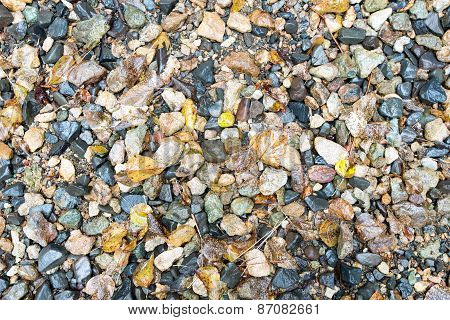 Wet Small Rocks And Fallen Leaves For Backgrounds