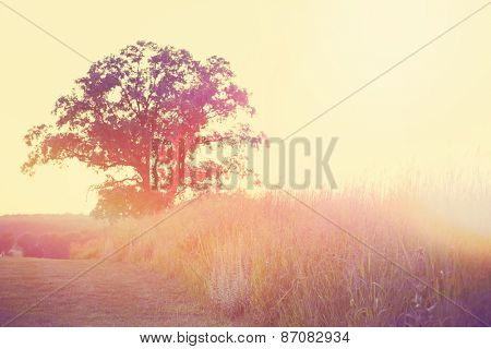 Sunset meadow. Instagram effect.