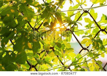 Leaf Sunset Summer Relax Background Rim Light