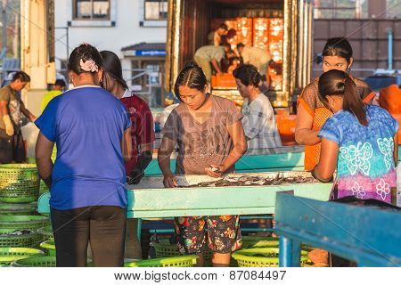 Phuket - February 23 : Burmese People Are Working In Fish Market At Phuket Province, Which Mostly La