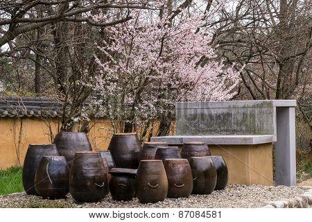Cherry Blossom In A Garden