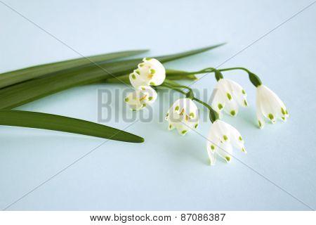 Flower - Snowflake