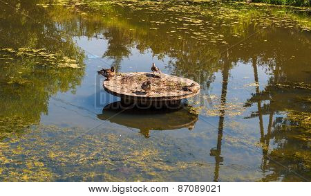 four ducks sitting on a wooden circle in the middle of the pond