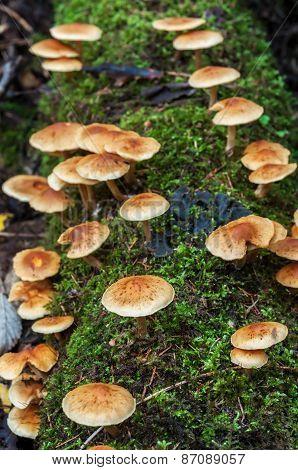 Small mushrooms on moss