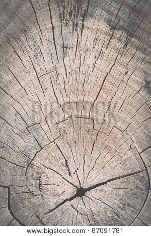 Texture Of Tree Stump For Background
