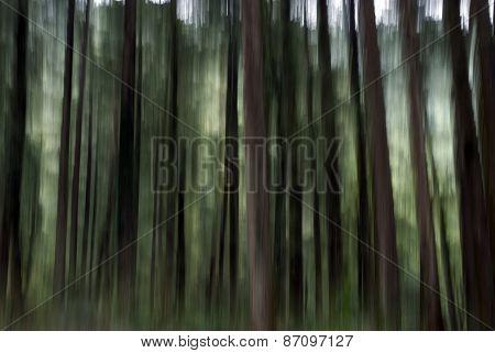 BLUR FOREST