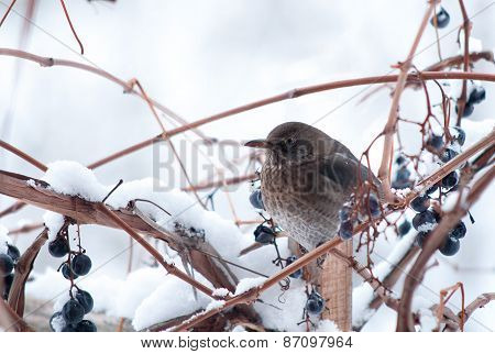 Bird And Snow