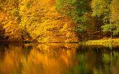 picture of orange-tree  - Natural landscape - JPG