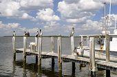 Постер, плакат: Pelicans on the dock