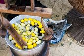 picture of silk worm  - Silk Production Process Silkworm from egg to worm the process bringing silks to silk - JPG