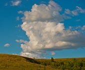 picture of steppes  - rural landscape in the forest - JPG