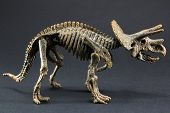 pic of dinosaur  - Triceratops fossil dinosaur skeleton model toy on black background - JPG