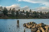 pic of jetties  - Urban landscape of Lake Washington near Seattle with a small jetty birds and residences - JPG
