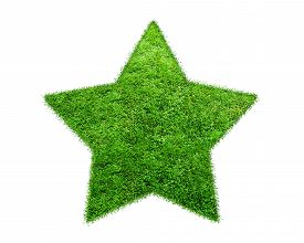 picture of star shape  - The Green Grass Star on white background - JPG