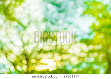 Blur Image Of Abstract Bokeh Of Tree Green Color Background.