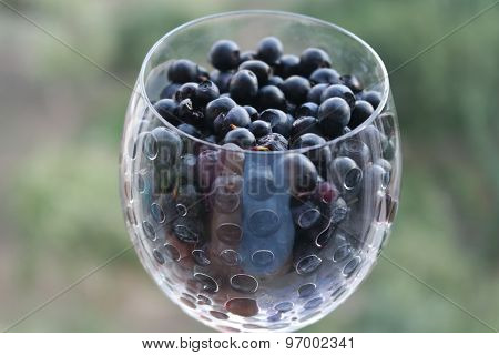 romantic wine glass filled with wild berries, blueberries against a background of green nature