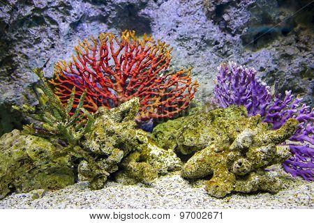 Red corals in aquarium at Siam Paragon, Bangkok