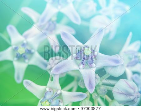 Abstract Blurry Crown Flower Colorful Background.