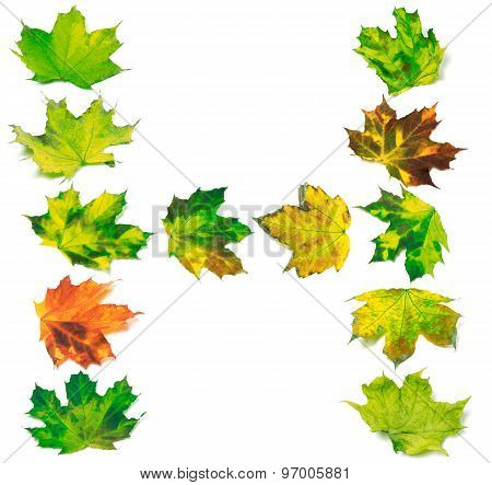Letter H Composed Of Multicolor Maple Leafs