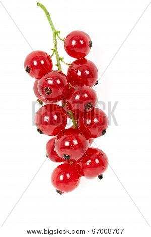 Redcurrant, Isolated On White