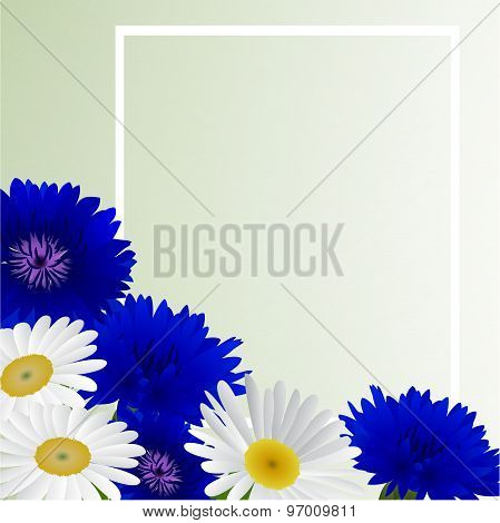 Vector white background with flowers camomile, cornflowers