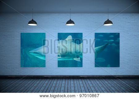 Grey room against shark swimming in fish tank