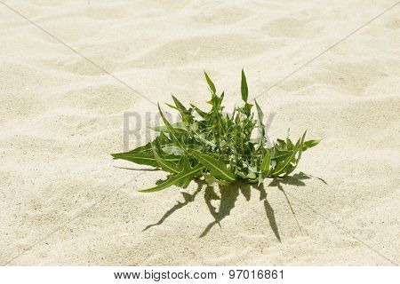 Green plant on sand beach