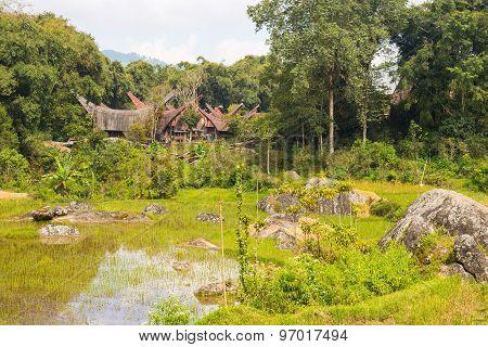 Traditional Toraja Village In Idyllic Landscape