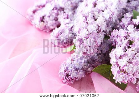 Beautiful Lilac Flowers On Pink Cloth Background