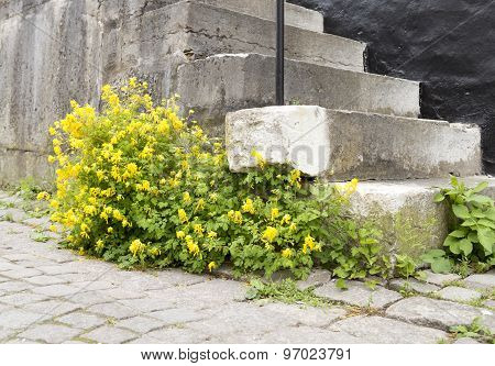 Yellow Flowers By Stone Steps