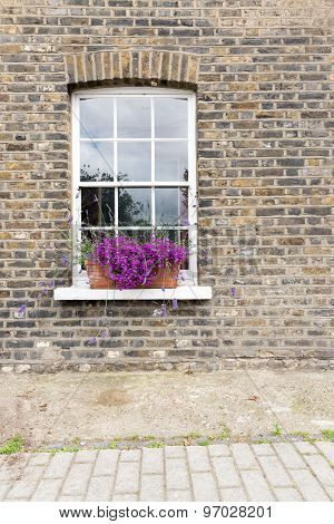 Purple Flowers In Window Box