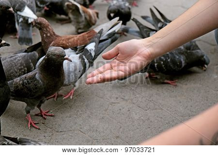 Girl feeding pigeons in square