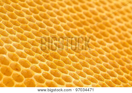 Fresh Unused Drawn Honeycomb.