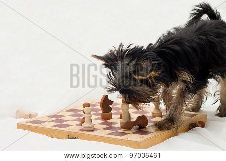 Dog playing chess