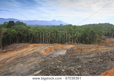 Deforestation environmental problem