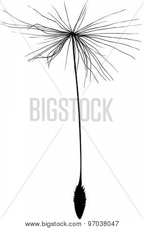 illustration with single dandelion seed silhouette isolated on white background