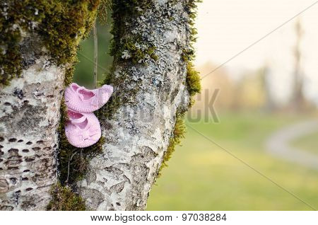 booties in tree