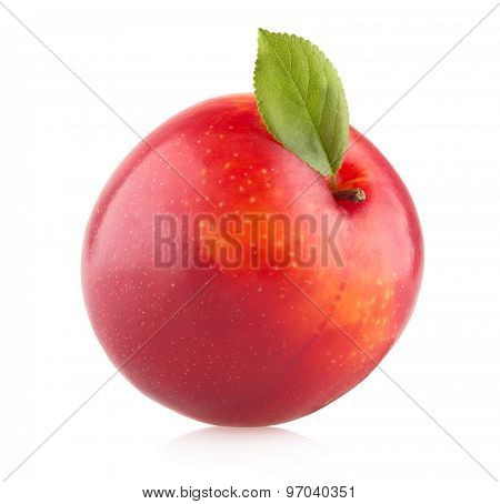 red plum on white background