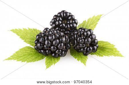 fresh blackberries isolated on white background