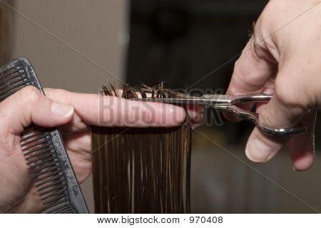 Cutting Haiar