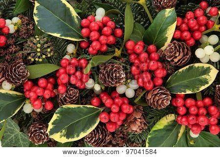Winter and christmas abstract background with variegated holly, ivy, mistletoe and winter greenery.