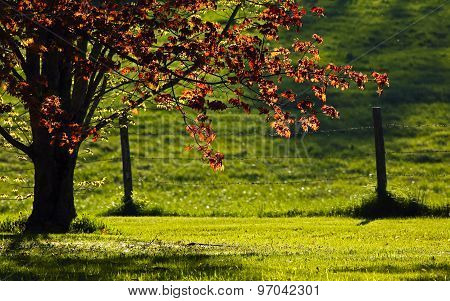 Backlit Evening Sun Rural Fence Tree