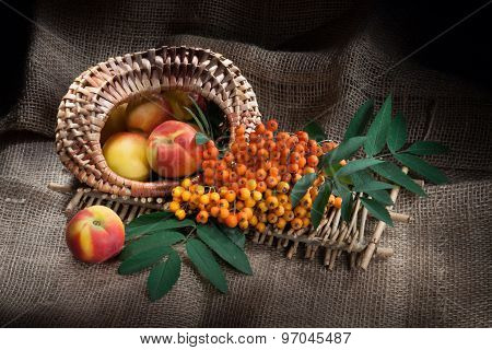 Still Life With Peaches And Ashberry