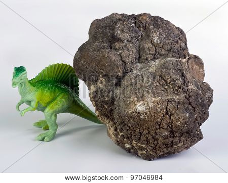 Dinosaur Poop.