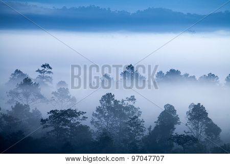 Fog in forest at Khao-kho Phetchabun,Thailand