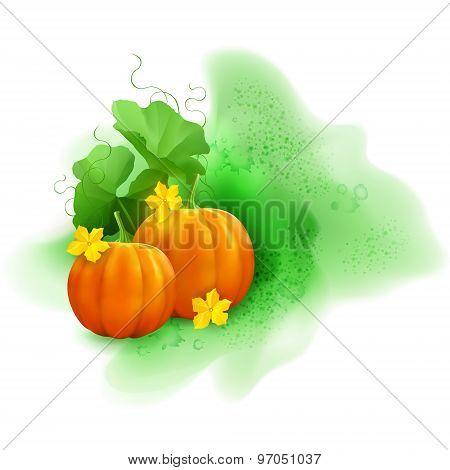 Watercolor Vector Pumpkin